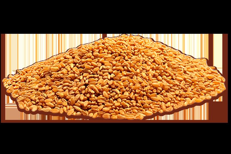 Pane dell'anno 1000-materie prime-panificio genova-pane-grani-bidì