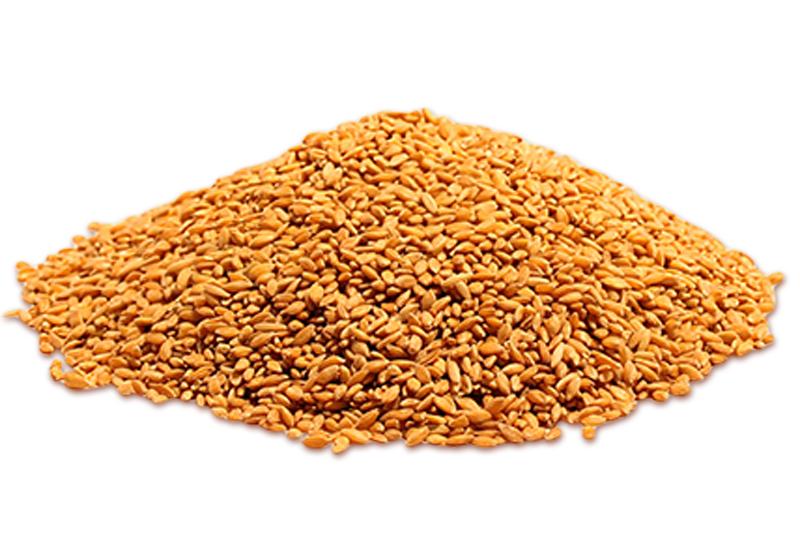 Pane dell'anno 1000-pane-grani-primordial-monococco-enkir